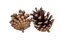 Two pine cones isolated on white background Royalty Free Stock Photography