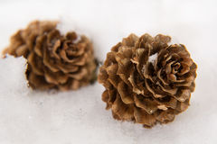 Two pine cones in the snow Royalty Free Stock Photo
