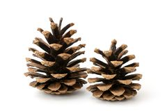 Two pine cones on a white royalty free stock photo