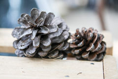 Two pine cones on the wooden Royalty Free Stock Photos
