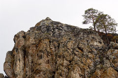 Two pine trees growing on a cliff Stock Image