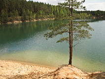 Two pine trees by the lake Stock Images