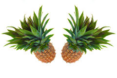 Two pineapple against a white background Stock Image