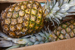 Two pineapples from a market Royalty Free Stock Image