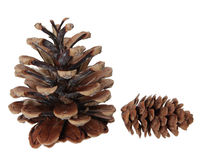 Two pinecones Royalty Free Stock Images