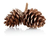 Two pinecones on branch Stock Images