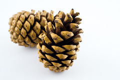 Two pinecones Royalty Free Stock Photos