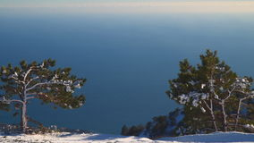 Two pines on the edge of the mountain. Far below, one can see the sea stock video