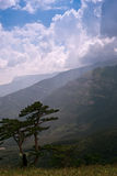 Two pines in the mountains. The blue sky, clouds, mountains, two pines Royalty Free Stock Photos