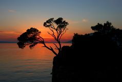 Two pines on a rock royalty free stock images