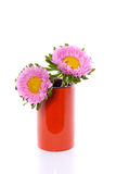 Two pink Anjer daisies Stock Images