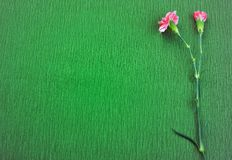 Two pink carnation on green background Stock Photo