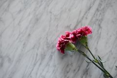 Two pink carnations on a marble table stock images