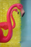 Two pink flamingos Stock Photos