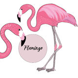 Two pink flamingos with black beaks. Vector illustration on white background. Flamingo name in the pink circle. Hand drawn two pink flamingos on white background stock illustration