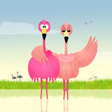 Two pink flamingos in love Stock Image