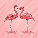 Two pink flamingos in vector Royalty Free Stock Photography