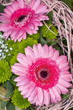 Two pink gerbera. Bouquet of arranging Stock Photography