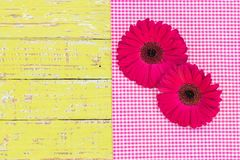 Pink gerbera daisy flowers on pink checkered fabric and rustic wood, top view. Two pink gerbera daisy flower heads on pink fabric and yellow wood, top view, copy royalty free stock images