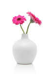 Two pink gerbera flowers in white vase stock photo