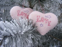 Two pink hearts love on the branch of pine. For valentine day Stock Image