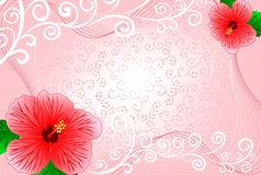 Frame with hibiscus Royalty Free Stock Photos