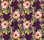Two pink Hydrangeas watercolor flower illustration Stock Photo