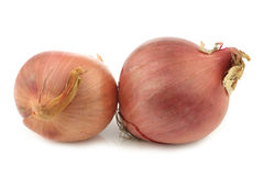 Two pink onions Royalty Free Stock Photo