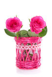 Two pink roses Royalty Free Stock Images