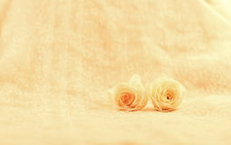 Two pink roses flower Stock Photography