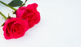 Two pink roses on light background. With copy space Royalty Free Stock Images