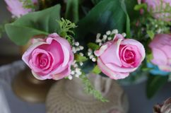 The two pink roses stock photo