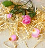 Two pink roses and wood stock images