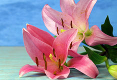 Two pink Tiger Lilies Stock Photo