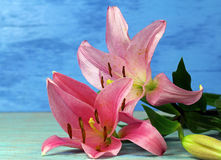 Two pink Tiger Lilies. On blue background, selective focus Stock Photo