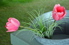 Two pink tulips in bucket Royalty Free Stock Images