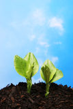 Two plants against sky Royalty Free Stock Photography