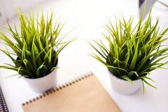 Two plants Stock Photo