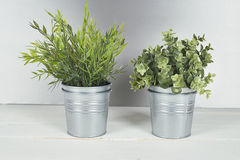 Two plants with metal pot on wooden table. Stock Images