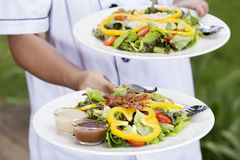 Two plate of Green salad Stock Images