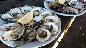 Two plates of oysters Royalty Free Stock Photos