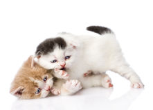 Two playful british kittens. isolated on white background Stock Photo