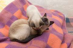 Two playful cats Stock Image