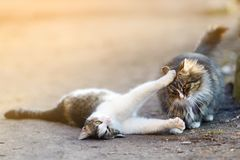 Two playful cats on spring Royalty Free Stock Photography