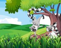 Two playful lemurs at the forest. Illustration of the two playful lemurs at the forest royalty free illustration