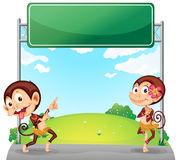 Two playful monkeys in front of the empty green board Stock Photography