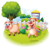 Two playful pigs near the wooden fence. Illustration of the two playful pigs near the wooden fence on a white background Royalty Free Stock Photography