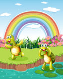 Two playful turtles at the pond with a rainbow Royalty Free Stock Photos