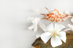 Two plumeria flowers on sunset sand beach. With copy space, Maldives Stock Photos