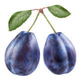 Two plums Royalty Free Stock Images